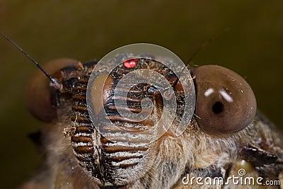 cicada-face-shot-8397503.jpg