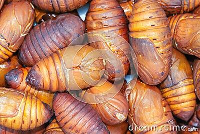 Cicada pupa