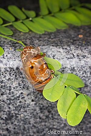 Cicada Slough in Branch