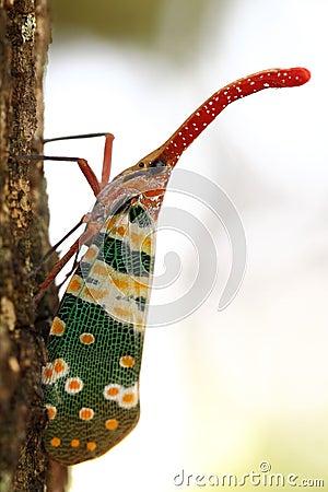 Cicada trunk.