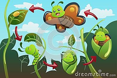 El Ciclo De Vida De La Mariposa Monarca La Mariposa Monarca