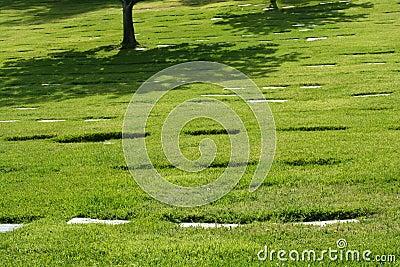 Cień od drzewa w cmentarzu