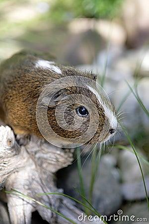 Ciekawy królik doświadczalny