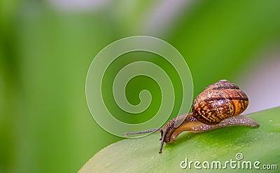 Ciekawy ślimaczek na liściu.