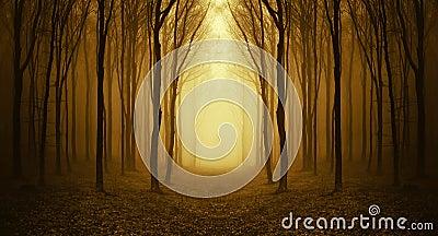 Ścieżki synklina dziwaczny las z mgłą w jesieni