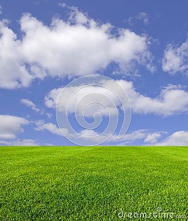 Ciel et herbe