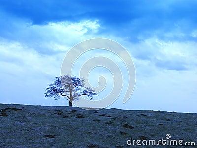 Cieli nuvolosi ed albero