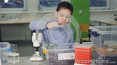 Científico joven en la escuela que hace un experimento de la biología en laboratorio almacen de video
