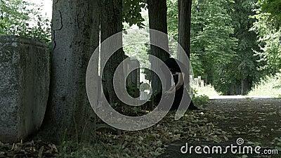Cierpieć opłakujący kobiety w żałobnej sukni na jej kolanach przy grób jej nieżywy ukochany uczucia stroskanie i pożałowania zdjęcie wideo