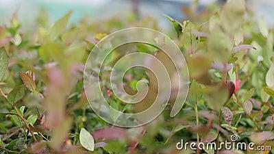 Cierre de hojas de semilla botánica metrajes