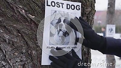 Cierre de manos en guantes de invierno colgando el anuncio de perro perdido en el árbol Dueño de San Bernardo buscando mascota pe metrajes