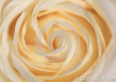 Cierre de Rose para arriba