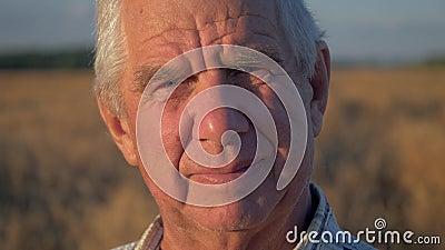 Cierre del retrato para arriba del hombre caucásico mayor que trabaja en el campo del trigo en la puesta del sol metrajes