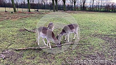 Ciervos lindos en el bosque metrajes