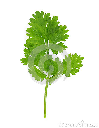 Free Cilantro Royalty Free Stock Images - 34655219
