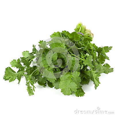 Cilantro Isolated
