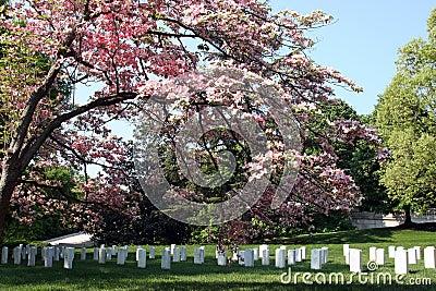 Cimetière national d Arlington