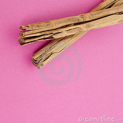 Cinnamon on Vibrant Pink