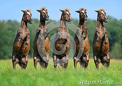 Cinq poneys arrière