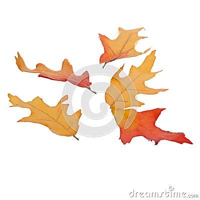 Cinque foglie di caduta isolate