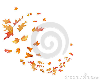 Circular pattern of Fall Leaves Isolated