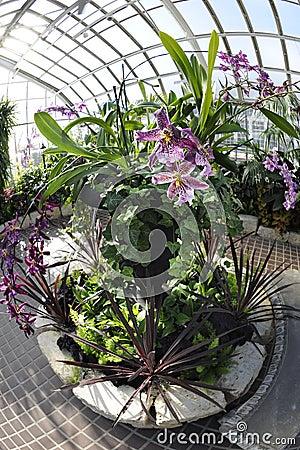 Circular Plantings