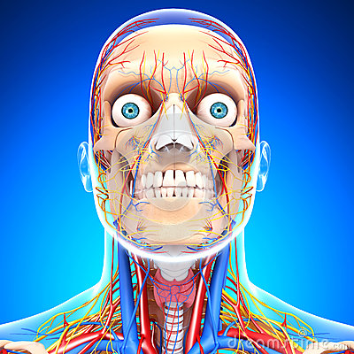 Circulatory and nervous system in blue of eyes,