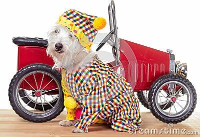 Circus Clown Dog and Clown Car