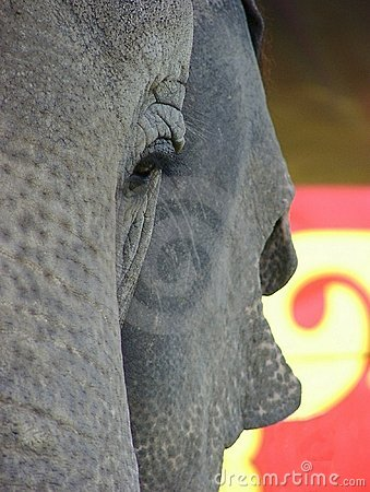 Free Circus Elephant Stock Images - 427824