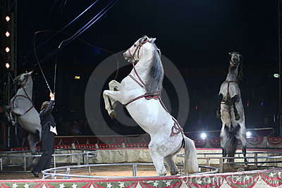 Circus spectacle
