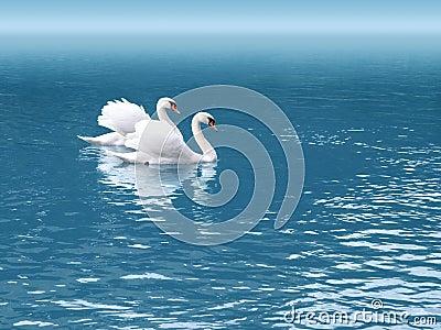 Cisne dos