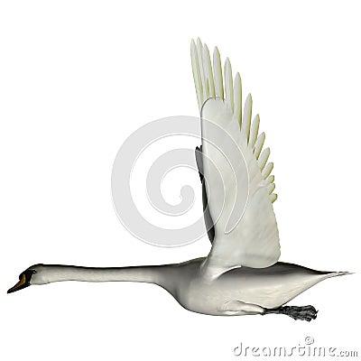 A cisne voa acima