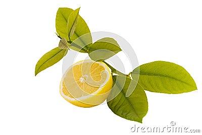 Citron coupé en tranches