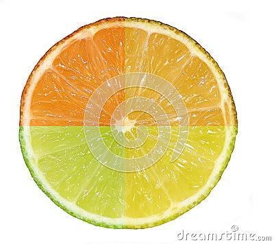 Citrus - 4 in 1