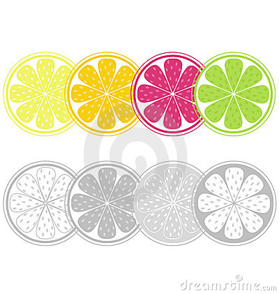 Citrus fruit slices in retro style isolated on whi