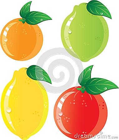 Citrus fruits icon set