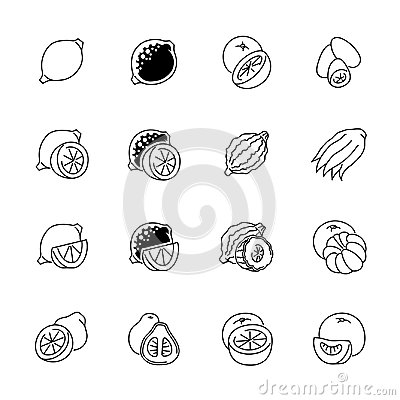 Free Citrus Fruits Icons - Lemon, Orange And Pomelo Stock Photo - 101158680