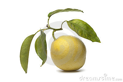 Citrus Medica fruit