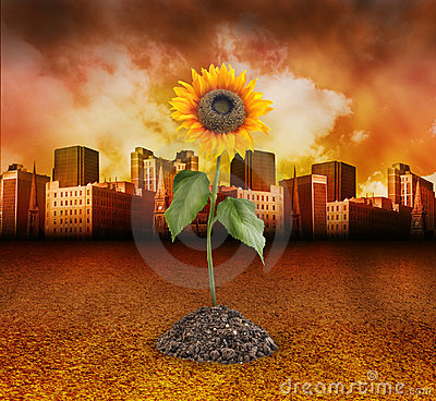 City Destruction with Nature Sunflower Growing