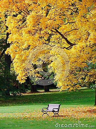 City park in autumn