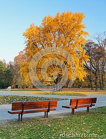 City park in autumn - Bratislava