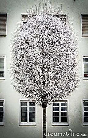 City Snow Tree