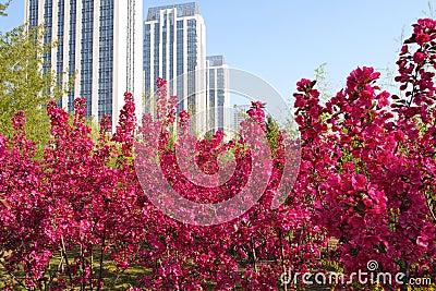 City spring