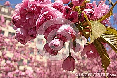 City spring environment
