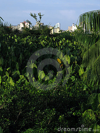 City in vegetation