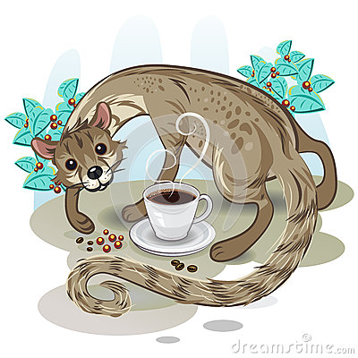 Civet Coffee Kopi Luwak Royalty Free Stock Image - Image ...