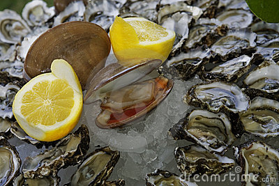 Clam and Oyster