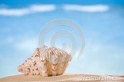 Clam seashell  with ocean , beach and seascape