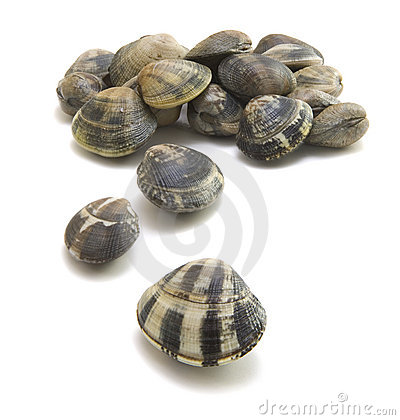 Free Clam-vongole Royalty Free Stock Photo - 11839355