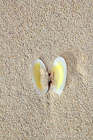 Clams shell open in caribbean beach sand